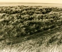 landscapes-001