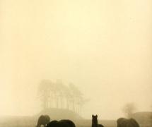 landscapes-0010
