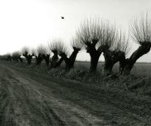 landscapes-0011