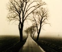 landscapes-007