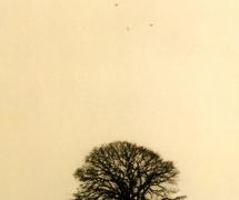 landscapes-008