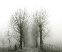 landscapes-009